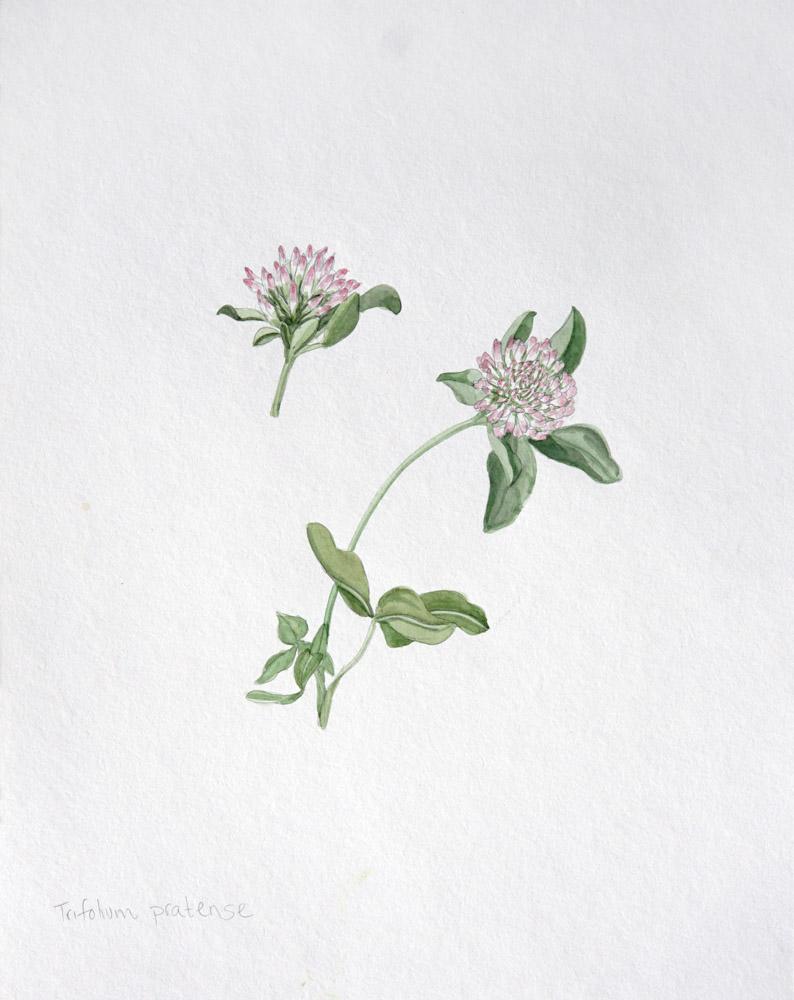 Spring Botanical Watercolor Workshop