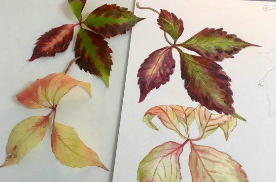 Fall Botanical Watercolor Workshop